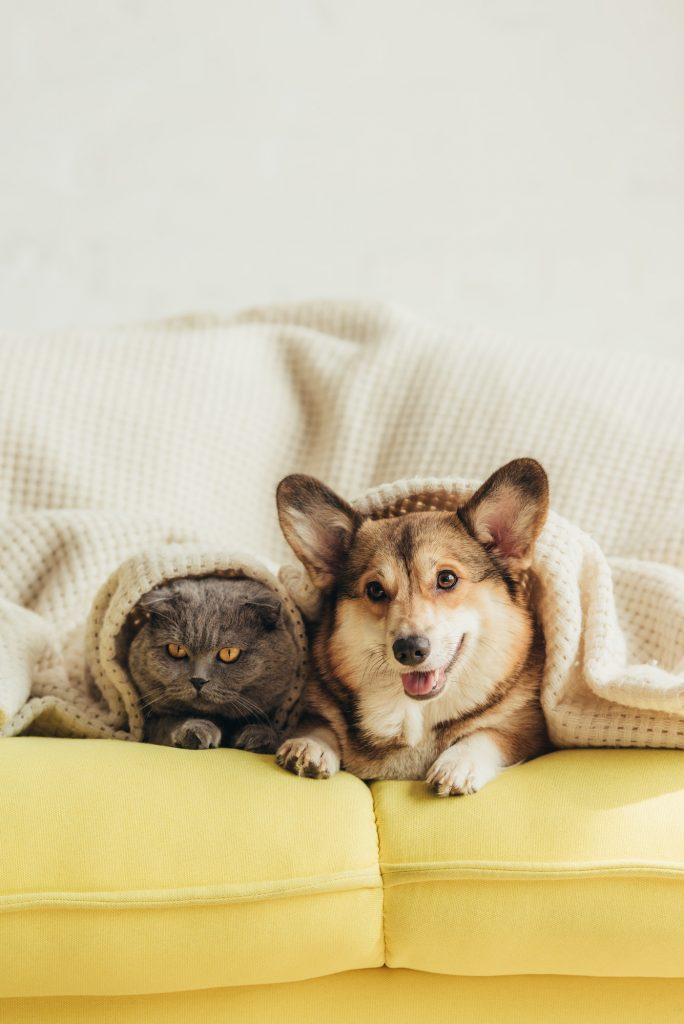 imatge d'un gos i gat tapats al sofa